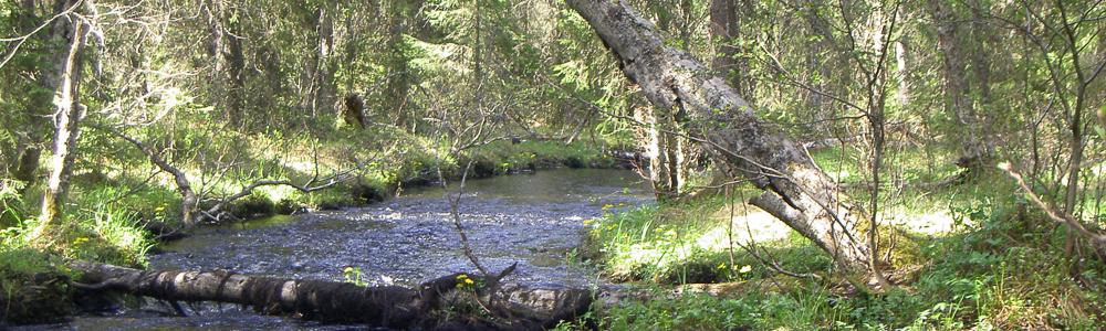 >Skogsdagarna för våra delägare är uppskattade och välbesökta…